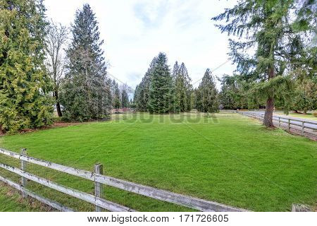 Spacious Fenced Backyard Filled With Green Grass