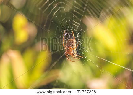 Orb weaver spider on web in green natural area.