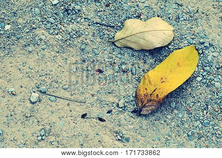 Fallen dry leaves earth tone color abstract background