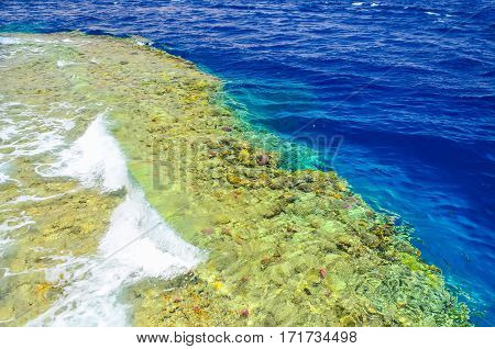 Beautiful Coral Reef In The Sea Under The Water. Egypt, Sharm El Sheikh.