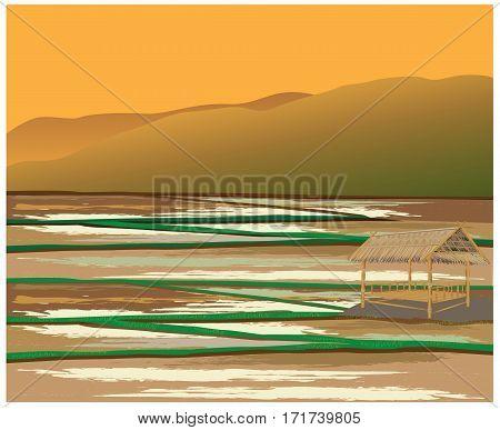 paddy field have straw hut vector design