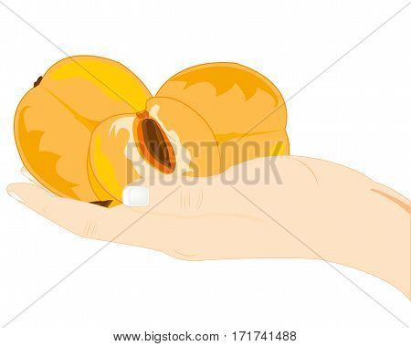 Ripe fruits of the peach on palm of the person