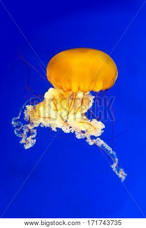 Jellyfish swimming in the ocean vertical image