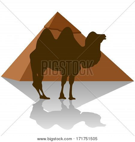 Camel on the background of the Egyptian pyramids. The illustration on a white background.