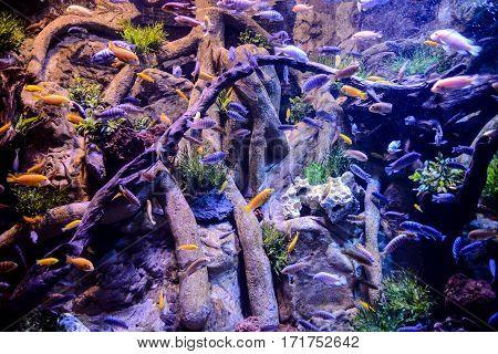 Acquarium Full Of Beautiful Tropical Fishes