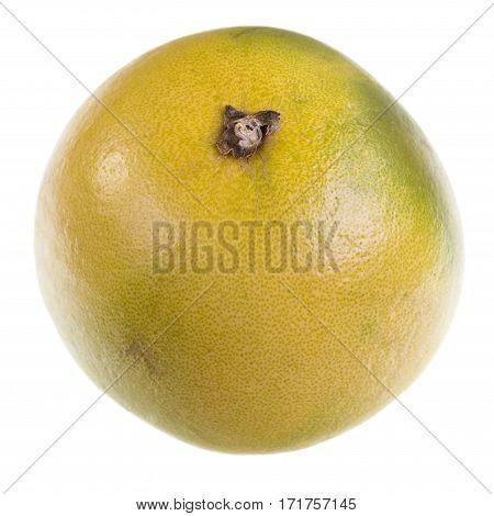 Pale green pomelo citrus maxima on white background