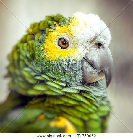 Green bird plumage Harlequin Macaw feathers nature texture background