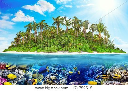 Tropical Island In Ocean And Beautiful Underwater World.