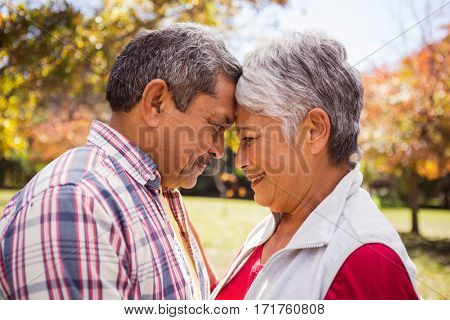 An elderly couple embracing and romancing while standing at park