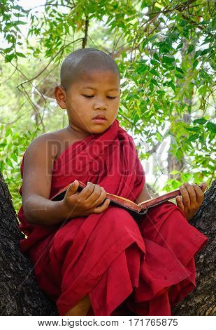 A Buddhist novice monk reading book on the tree in Bagan Myanmar. Bagan in central Burma is one of the worlds greatest archeological sites.