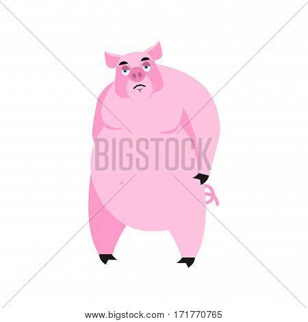 Pig Sad Emoji. Piggy Sorrowful Emotion On White Background. Farm Animal
