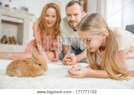 Happy family with one child playing with cute fluffy rabbit at home