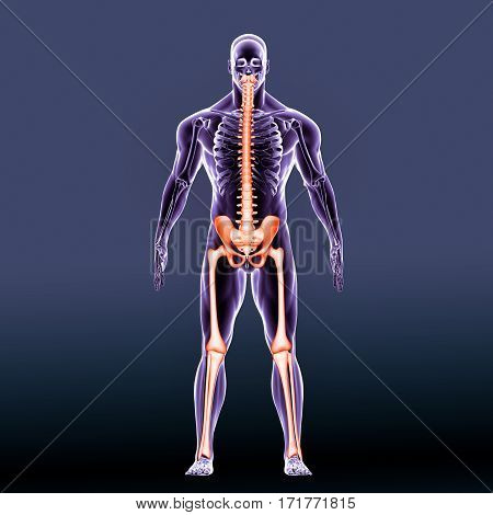 The human leg is the entire lower extremity or limb of the human body