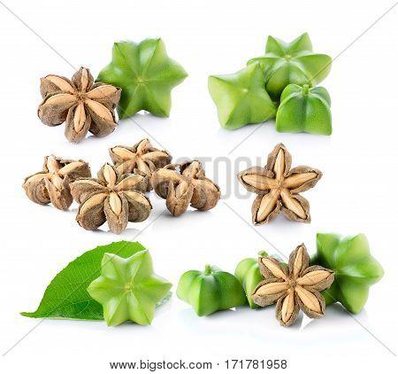 Sacha Inchi on white background fresh capsule seeds fruit of sacha-Inchi peanut