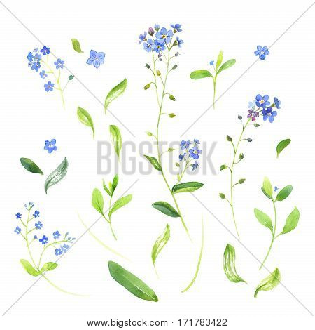 Floral set of watercolor wildflowers and leaves. Isolate on white background.