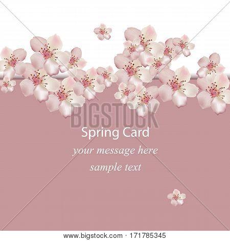 Cherry flowers blossom spring card Vector illustration. Delicate decor for anniversary, wedding, birthday, events, invitation