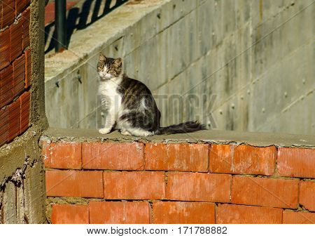Stray Cat Sitting On The New Built Brick Wall