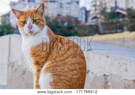Portrait Of A Funny Red Stray Cat With Green Eyes