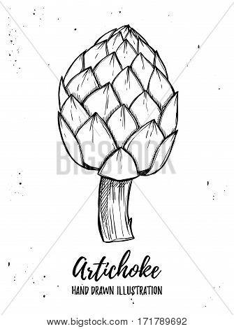 Hand Drawn Vector Illustration - Artichoke. Fresh Organic Vegetable. Design Element In Sketch Style.