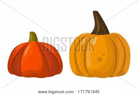 Fresh orange pumpkin isolated on white background. Decorative fresh single seasonal ripe food. Thanksgiving stem healthy raw vegetarian vegetable.