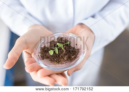 partial view of scientist holding container with plant on ground