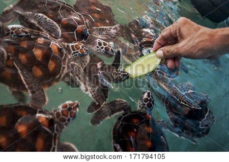 Feeding Water Turtles, Breeding Pool To Maintain Treatment Populations