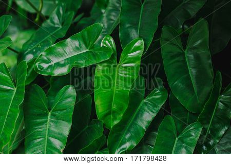 Low key Green leaf texture. Leaf texture background