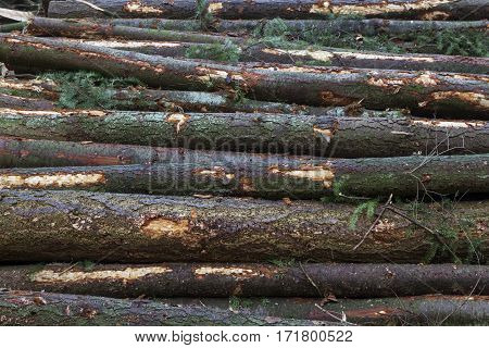 stack of spruce logs with bark closeup