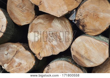 stack of freshly sawn beech logs in closeup on horizontal picture