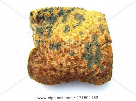 One piece of moldy bread on a white background.