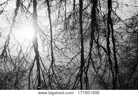 gloomy picture of reflected thin leafless trees in water of river