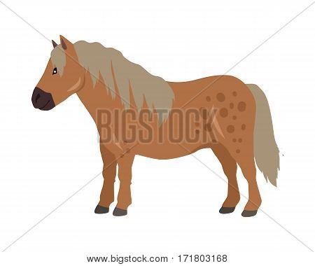 Red pony vector. Flat design. Domestic animal. Country inhabitants concept. For farming, animal husbandry, horse sport illustrating. Agricultural species. Isolated on white background