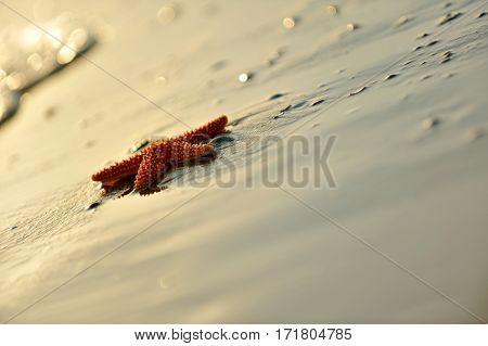 starfish on wet sand in summer