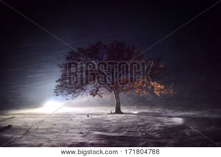 lonely tree on field during night snow storm