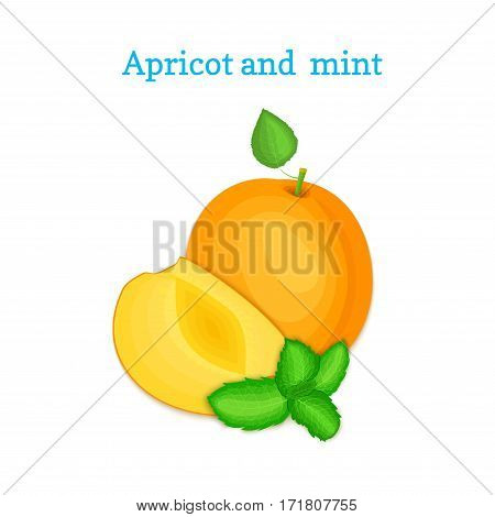 Vector composition of a few apricots and mint leaves. Ripe arricot fruits appetizing looking. Group of tasty ripe peach with pepper mint leaf packaging design of juice, breakfast, healthy vegan food.