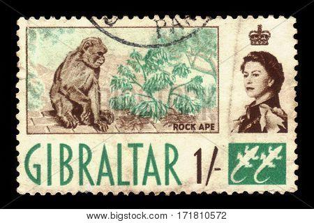 GIBRALTAR - CIRCA 1960: A stamp printed in Gibraltar shows Barbary Macaque (Macaca sylvanus), circa 1960
