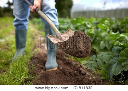 farming, gardening, agriculture and people concept - man with shovel digging garden bed or farm