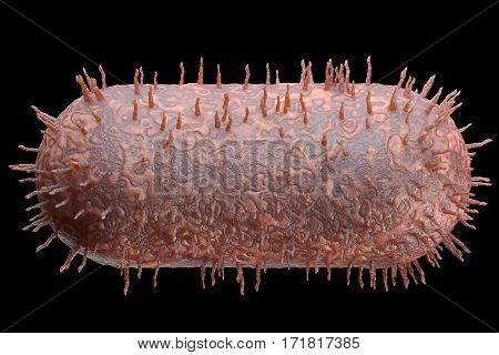 3d render bacteria or microbe in cross section. Microorganism, intracellular core, chromatin Isolated on a black background. Nucleus of the eukaryote cell. Abstract bacteria, microbes. Subject Biology