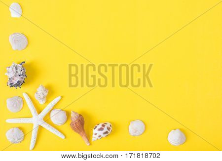 frame of seashell with copy space on colorful background Sea flat lay tropical and aloha concept.