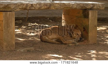 photo of a feral dog asleep in the shade