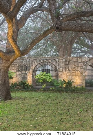 Live Oak Trees and Spanish Mission Wall on quiet foggy morning