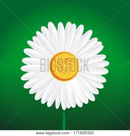 Chamomile, camomile, daisy wheel, daisy chain, chamomel. Daisy flower close-up. White daisy on a green background. Chamomile flower isolated on green background. Vector illustration
