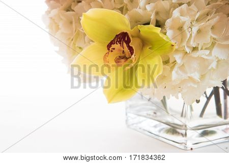 Orchid And Hydrangea