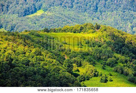Grassy Hillside On Mountain In Summer