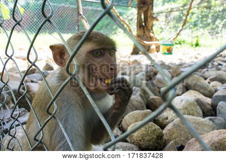 Monkey Sitting In The Zoo Cage. Animal Drink The Water