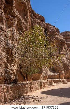 Canyon Siq passage leading to ancient city of Petra, Jordan