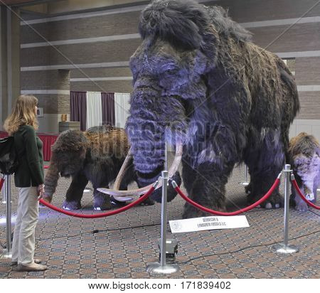 TUCSON, ARIZONA, FEBRUARY 12. The Tucson Convention Center on February 12, 2017, in Tucson, Arizona. A Woman Gazes at a Woolly Mammoth Family at the Tucson Gem and Mineral Show in Tucson Arizona.