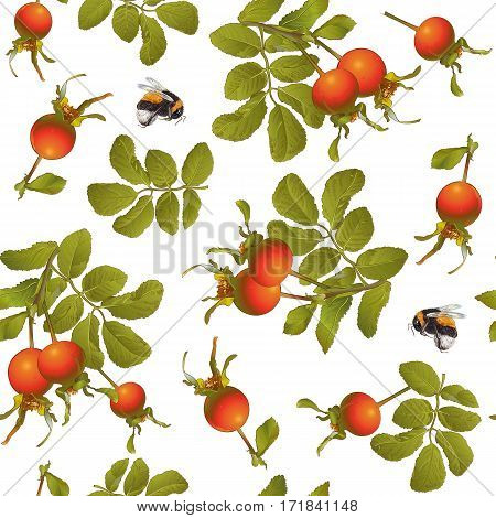 Rose hip seamless pattern on white background. Background design for tea, homeopathy, herbal cosmetics, health care products.