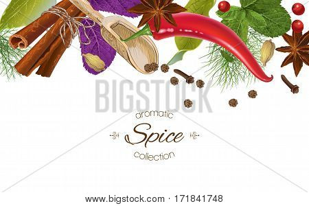 Vector spice horizontal banner with various seasonings on white background. Red chili peppers, bay leaves, cinnamon and other spices. Design for packaging, spice shop, recipe web site, cooking book