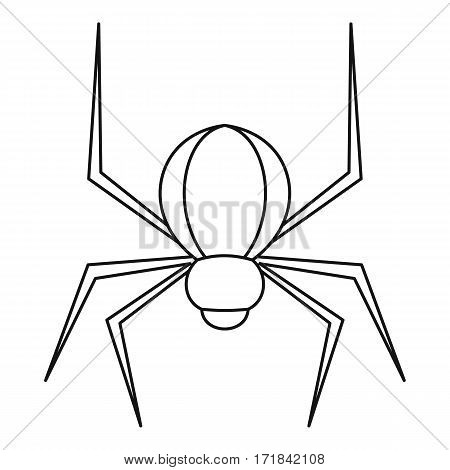 Spider insect icon. Outline illustration of spider insect vector icon for web